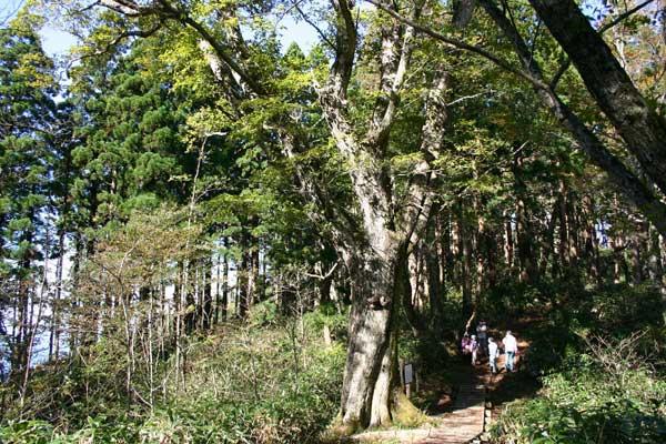 安蔵寺山(あぞうじやま)