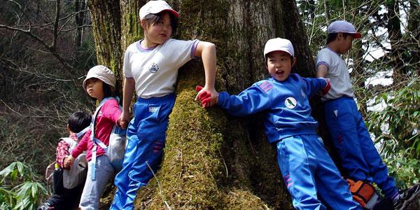 安蔵寺山の原生ブナの木の大木をぐるり!