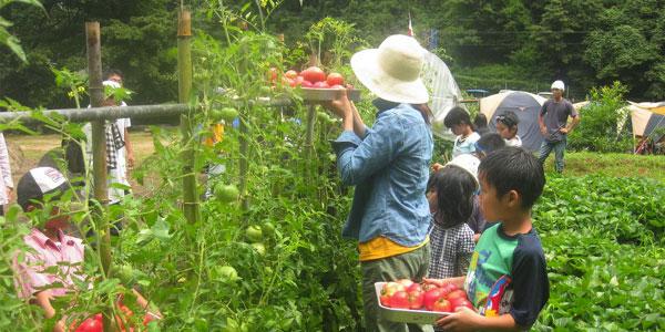 みんなで育てた野菜を収穫!