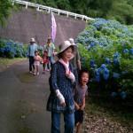 紫陽花群落2